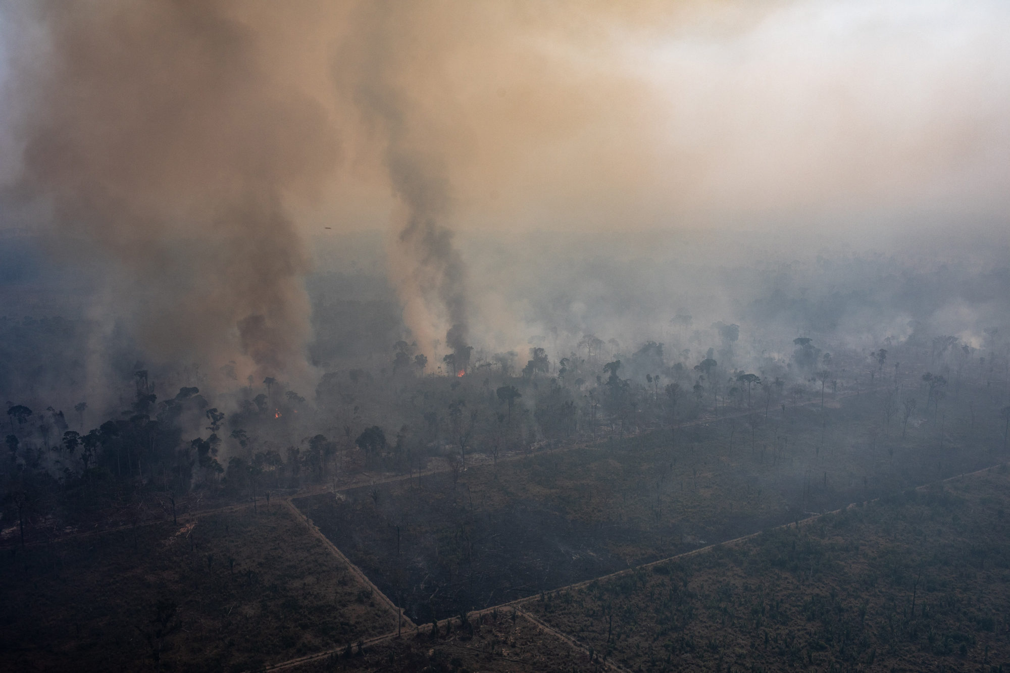 If Carbon Offsets Require Forests to Stay Standing, What Happens When the Amazon Is on Fire?