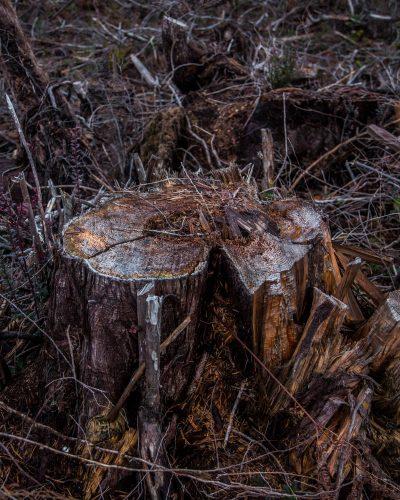 A Killing at Donkey Creek — ProPublica