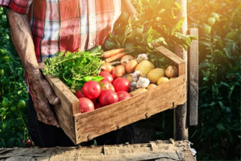 Uncovering The Fiction Of Farm To Table Food ProPublica - Farm table tampa