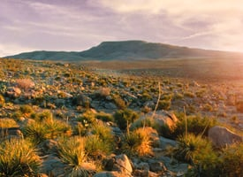 Otero Mesa (Credit: Steve Capra/New Mexico Wilderness Alliance, AP Photo)