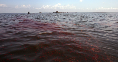 Heavy oil flows through the current in Barataria Bay on June 6, 2010, near Grand Isle, La. (Win McNamee/Getty Images)