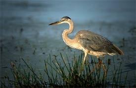 Myakka River Basin, Florida (Gary Burdette)