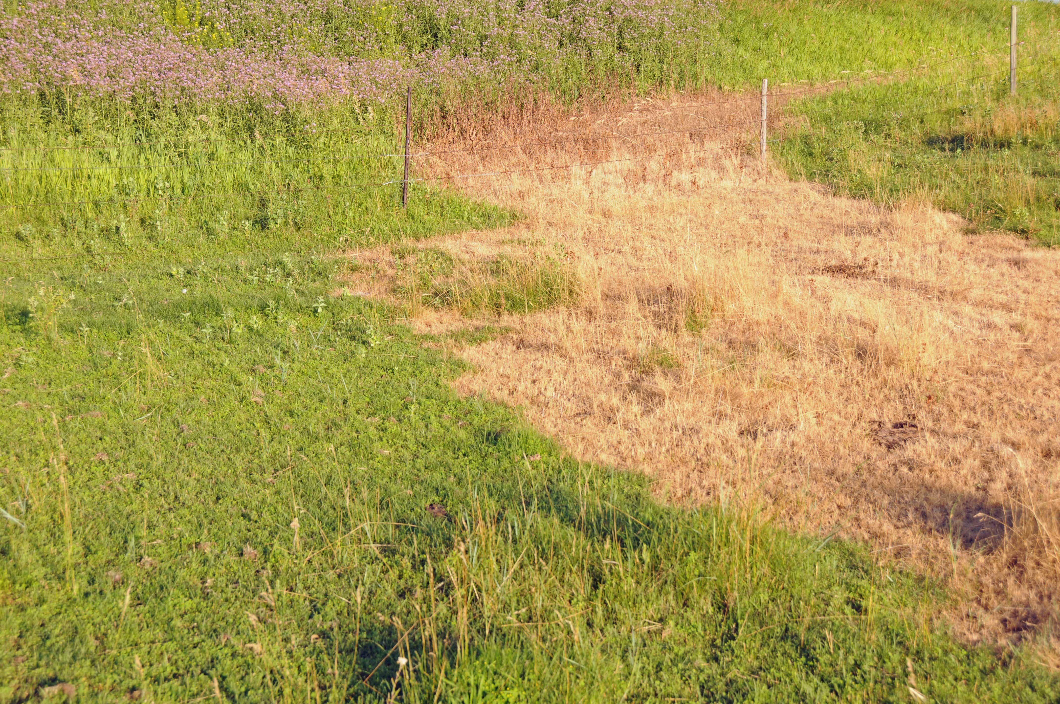 No Vegetation Natural Gas